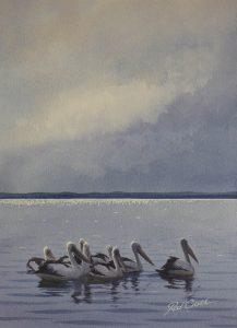 Pelican Pelicans